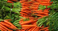 fresh-carrots-220