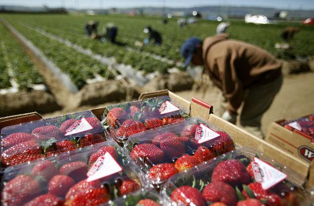 FB_Strawberries